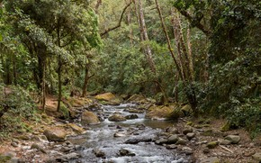 Picture forest, trees, nature, river, stones, stream