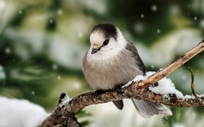 Picture winter, snow, branches, green, background, tree, bird, snowfall, bokeh, tit