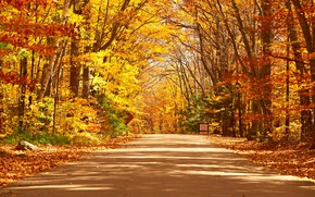 Picture road, autumn, forest, leaves, trees, Park, forest, road, landscape, park, autumn, leaves, tree, country, fall