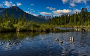Picture forest, mountains, nature, lake, shore, Canada, Albert, pond