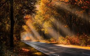 Wallpaper road, autumn, forest, light, morning