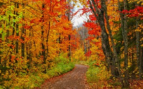Picture road, forest, trees, photo, USA, path, Minnesota
