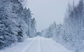 Picture snow, winter, road, ate, forest