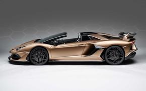 Picture Supercar, Brown, 2019, Lamborghini Aventador S Roadster