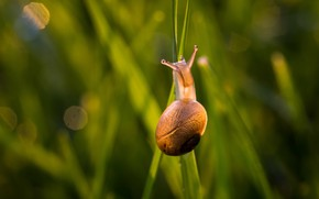 Picture summer, grass, macro, light, pose, snail, sink, shell, green background, horns, grass, bokeh