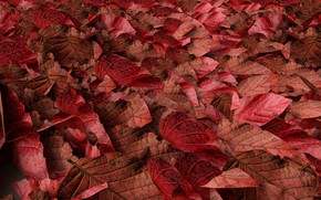 Picture autumn, leaves, background, colorful, red, autumn, leaves, autumn