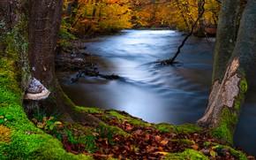 Picture autumn, forest, trees, landscape, nature, river