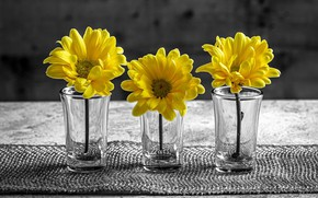 Picture flowers, background, glasses