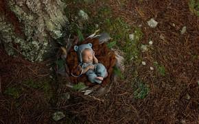 Picture sleep, feathers, socket, needles, baby, child, sleep, baby