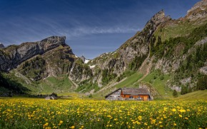 Picture the sun, flowers, mountains, rocks, Switzerland, Alps, meadow, houses, yellow, Alpstein