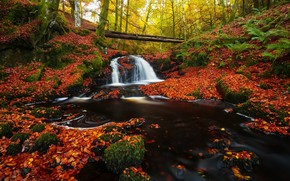 Picture autumn, forest, waterfall, log, falling leaves, bright foliage