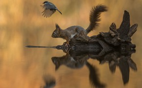 Picture water, reflection, background, bird, protein, snag, tit