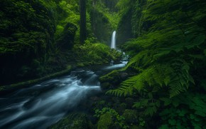 Picture forest, waterfall, Mossy Grotto Falls, Columbia River gorge