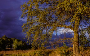 Picture the storm, field, summer, the sky, leaves, clouds, light, branches, clouds, nature, tree, branch, foliage, …