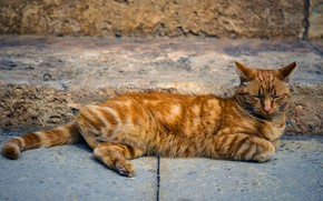 Picture cat, cat, pose, stay, street, tile, red, lies, the sidewalk, striped, Tomcat, Kote, street