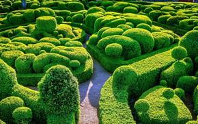 Picture Park, maze, the bushes