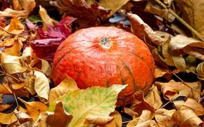 Picture autumn, leaves, pumpkin