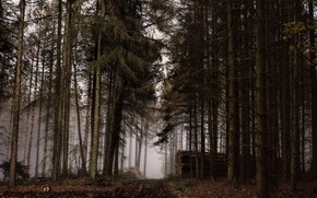 Picture autumn, forest, wood