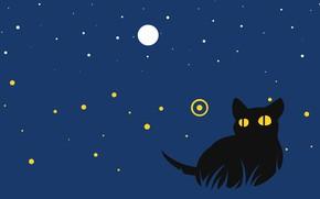 Picture cat, night, cat