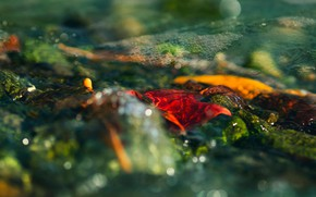 Wallpaper autumn, leaves, water, light, orange, yellow, red, nature, glare, bubbles, stream, stones, mood, for, leaves, ...