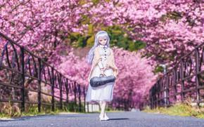 Picture trees, bridge, doll, Sakura