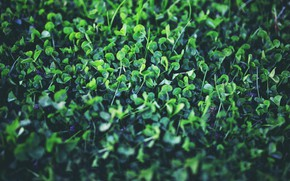 Picture Macro, Nature, Plant, Green, Nature, Flora, Plant, Kaboompics, Young clover
