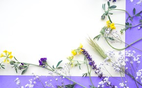 Picture flowers, field, yellow, flowers, purple, frame
