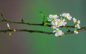 Picture macro, branch, spring, petals, garden, flowering