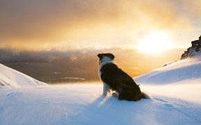 Picture dog, snow, mountains, winter, the sun, the border collie