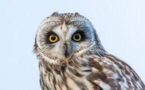 Picture sky, eyes, owl