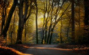 Picture road, autumn, forest, trees, branches, Park