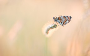 Picture macro, butterfly, insect, red, pink background, stem