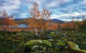 Picture nature, stones, birch