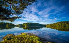 Picture the sky, branches, Sweden, forest, Sweden, lake, Gothenburg, Gothenburg, Delsjön Lakes, Lake Delsjön