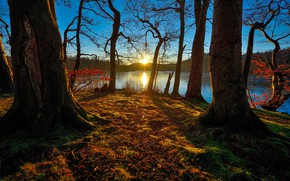 Picture forest, lake, morning