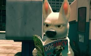 Picture dog, Bolt, Volt