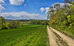 Picture road, field, summer