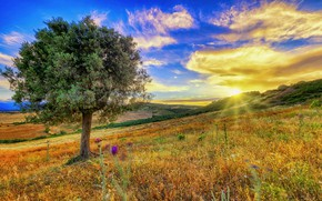 Picture the sky, sunset, tree, meadow, Italy, Italy, Calabria, Calabria