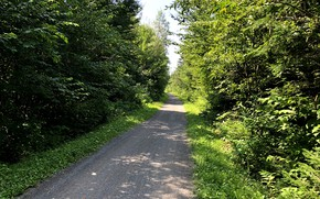 Picture forest, trees, Summer, gravel biking, cycling path