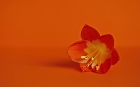 Picture flower, background, color