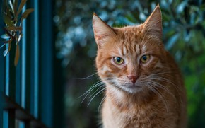 Picture eyes, cat, red