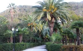 Picture autumn, palm trees, Gagra