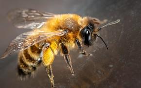 Picture macro, nature, bee