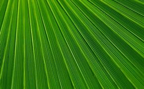 Picture Macro, Sheet, Leaf, Green, Flora