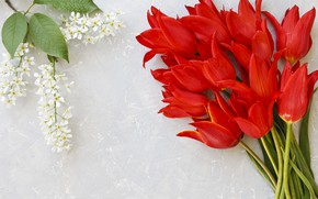 Picture flowers, bouquet, tulips, red, red, fresh, flowers, tulips, spring