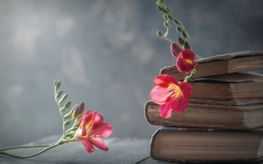 Picture flowers, style, background, books, freesia