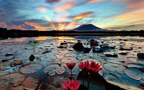 Picture The evening, Lake, Water lilies