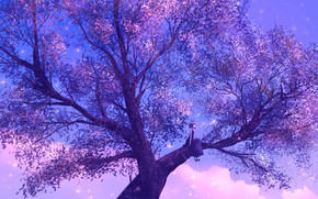 Picture sunset, tree, the evening, girl, sitting on a branch