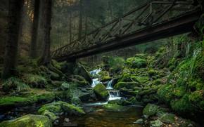 Picture greens, forest, trees, bridge, stream, stones, moss, Germany, Ravenna gorge