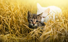 Picture cat, grass, look, leaves, light, nature, kitty, grey, glade, child, baby, white, kitty, striped, care, …